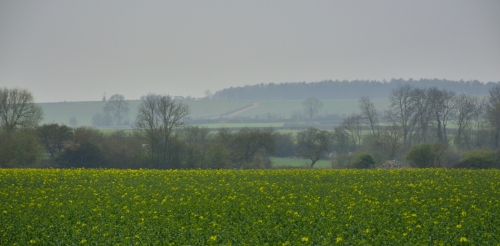 Central Cotswold field
