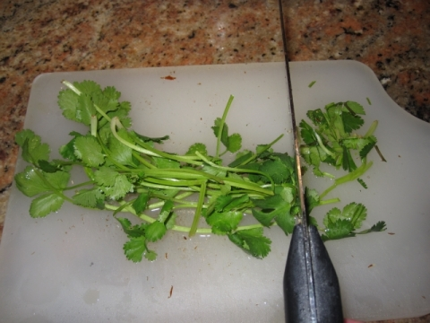 Chopping cilantro